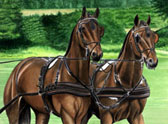 Carriage Driving, Equine Art - Matched Pair