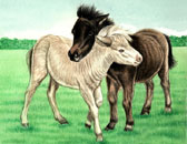 Miniature Horse, Equine Art - Mini Foals