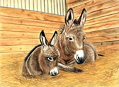 Donkey and Mule Art - Mom and Me