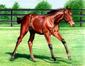 Thoroughbred, Equine Art - Morning Canter