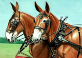 Donkey and Mule Art - Mule Team