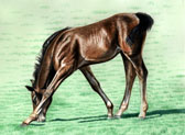 Standardbred, Equine Art - My Neck's Too Short
