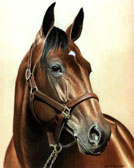 Standardbred, Equine Art - Niatross