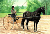 Carriage Driving, Equine Art - Nicely Turned Out