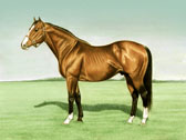 Thoroughbred, Equine Art - Northern Dancer2