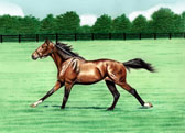 Standardbred, Equine Art - Not Supposed to be Cantering