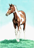 Mares and Foals, Equine Art - Paint Colt