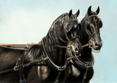 Carriage Driving, Equine Art - Pair of Friesians