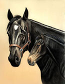 Standardbred, Equine Art - Princess and Prince