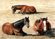 Mares and Foals, Equine Art - Resting