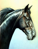 Standardbred, Equine Art - Royal Strength