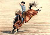 Rodeo - Saddle Bronc