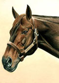 Thoroughbred, Equine Art - Seattle Slew