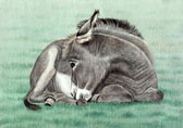 Donkey and Mule Art - Sleepy Donkey