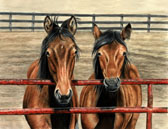 Standardbred, Equine Art - Spring Scruffies