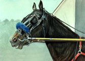 Standardbred, Equine Art - Spring Training
