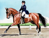 Dressage, Equine Art - Starting to Extend