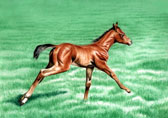 Mares and Foals, Equine Art - Stretching Out