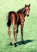 Standardbred, Equine Art - Tail End