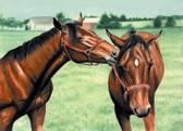 Standardbred, Equine Art - The Halter Shredding Game