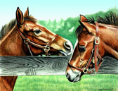 Thoroughbred, Equine Art - Thoroughbred Foals