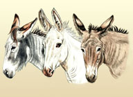 Donkey and Mule Art - Three Donkeys