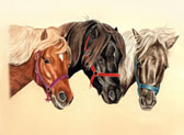 Miniature Horse, Equine Art - Three Minis