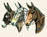 Donkey and Mule Art - Three Mules
