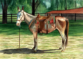 Donkey and Mule Art - Trail Riding Mule