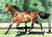 Standardbred, Equine Art - Trotting in the Paddock