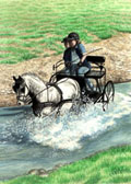 Carriage Driving, Equine Art - Water Hazard