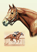 Thoroughbred, Equine Art - Secretariat Collage