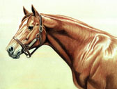 Thoroughbred, Equine Art - Secretariat Head Study