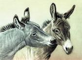 Donkey and Mule Art - Well Hello There