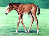 Mares and Foals, Equine Art - Where's Mommy