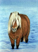 Pony, Equine Art - Winter Woolies