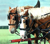 Draft Horse, Equine Art - Working Mothers